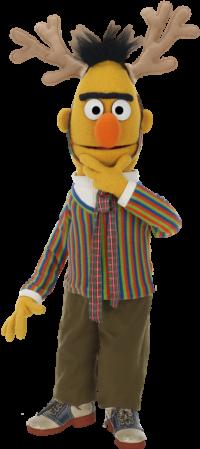 Bert 5